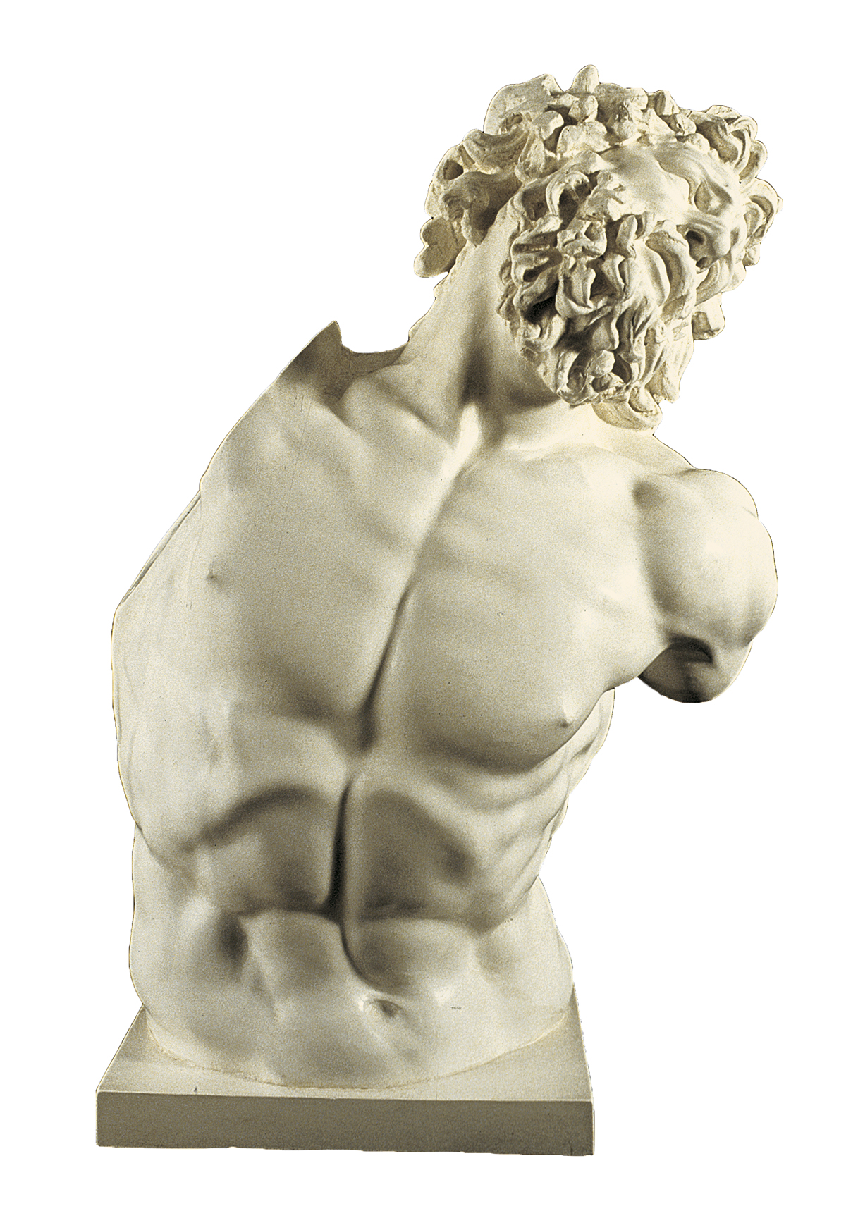 Bust of Laocoon (cast in plaster)