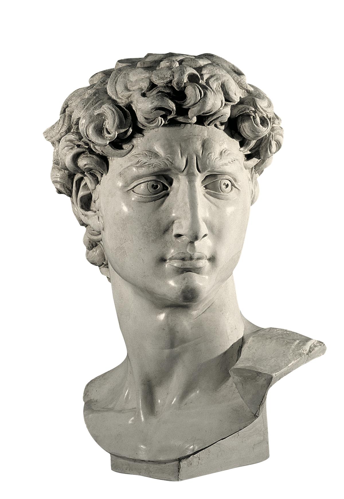 Testa del David di Michelangelo (copia in gesso)